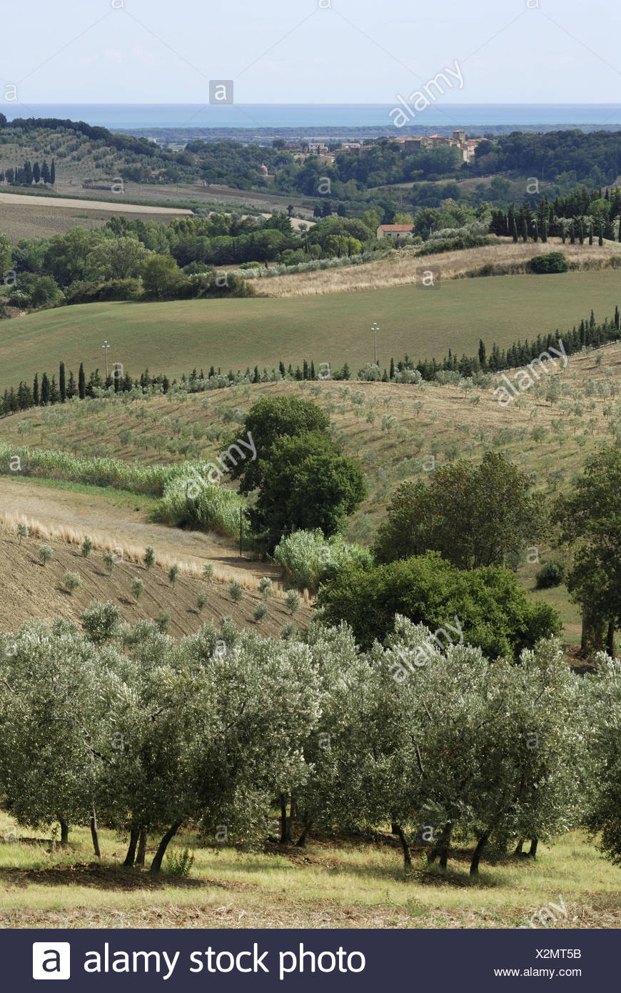 Bibbona Tuscany Italy Gentle rolling hills of the region around Bibbona and the distant mediterranean sea in the background - Stock Image