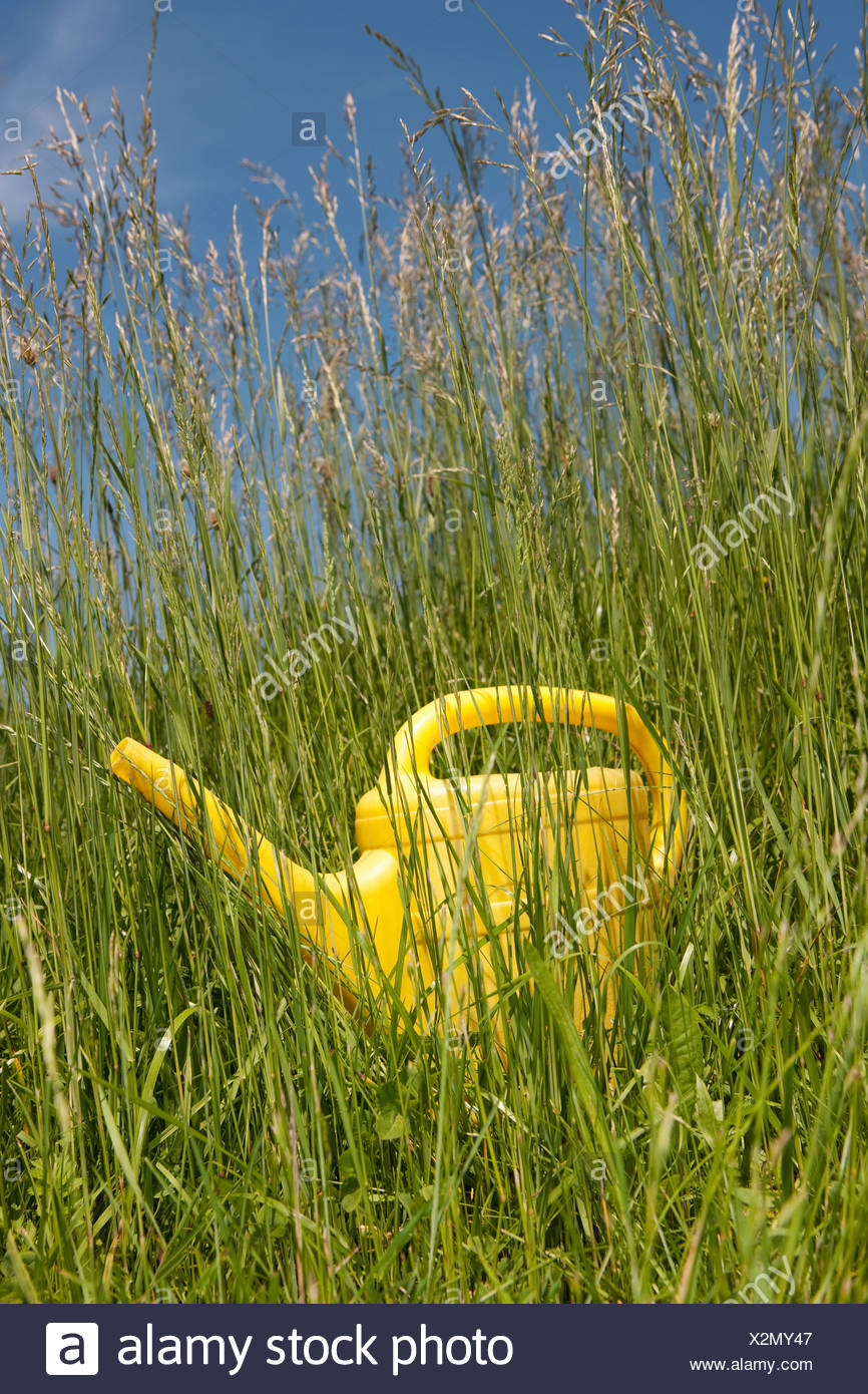 Yellow watering can in long grass - Stock Image