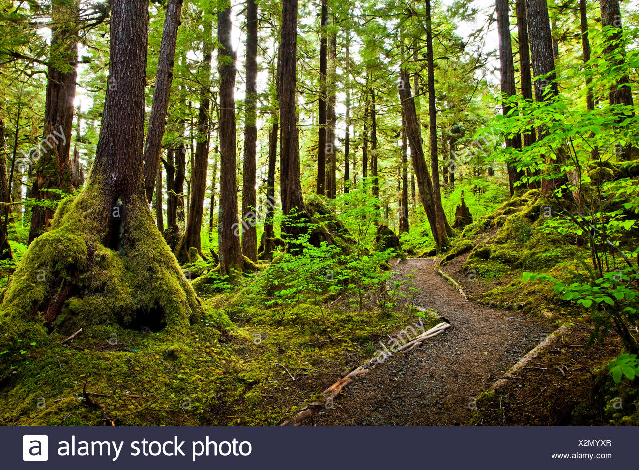 Lunch Falls Loop Trail winds through a temperate rainforest, Settler's Cove State Recreation Site, Ketchikan, Southeast Alaska - Stock Image