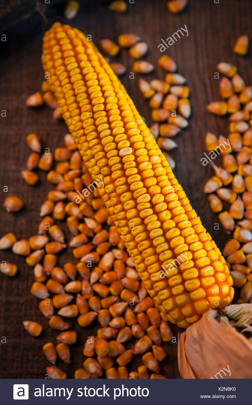 Corn Cob And Kernels, Croatia, Slavonia, Europe - Stock Image