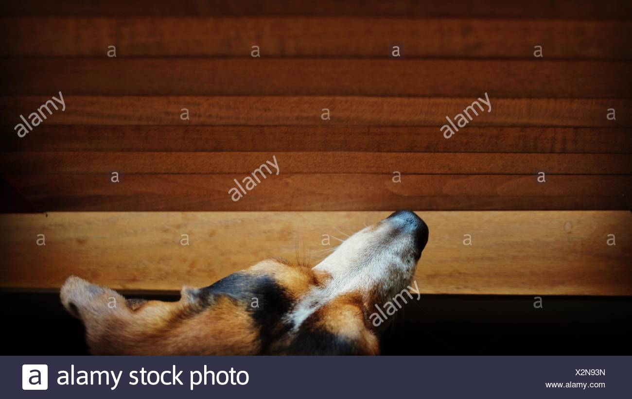 Directly Above Shot Of Dog At Home - Stock Image