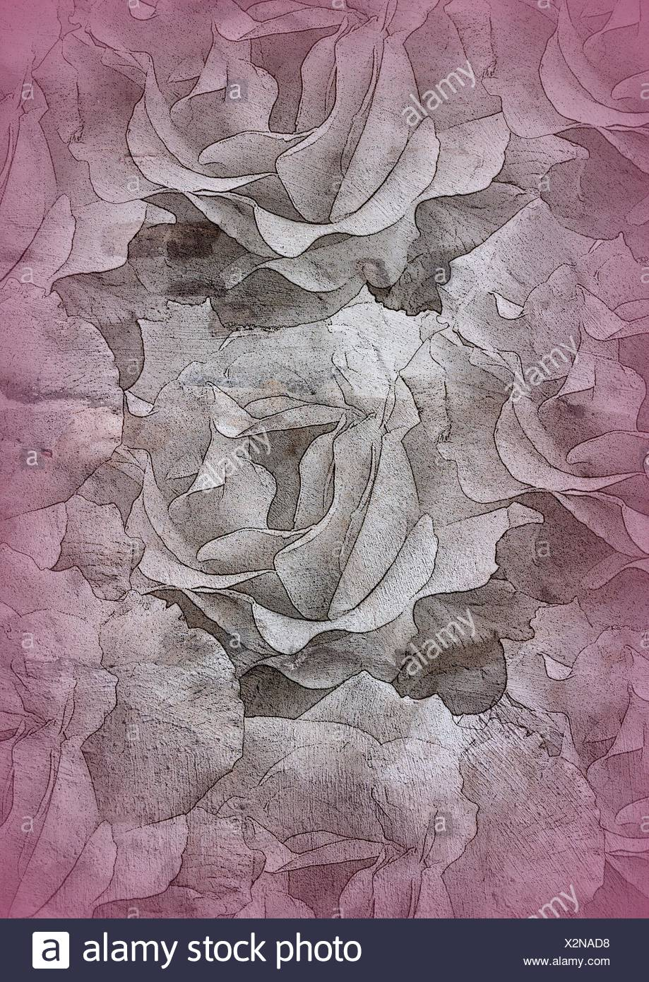 texture of roses Stock Photo