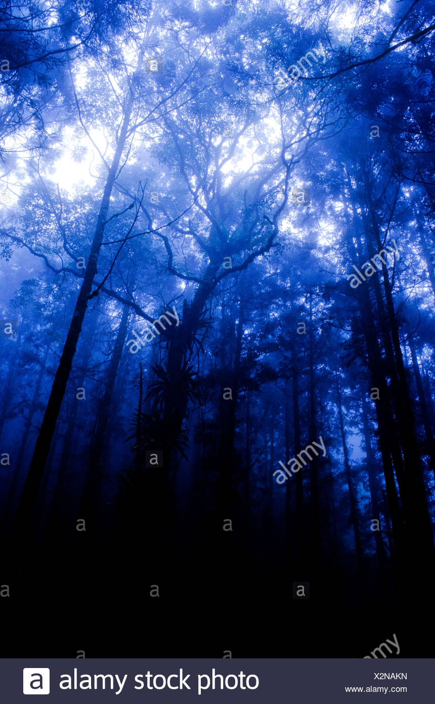 Deep black forest - Stock Image