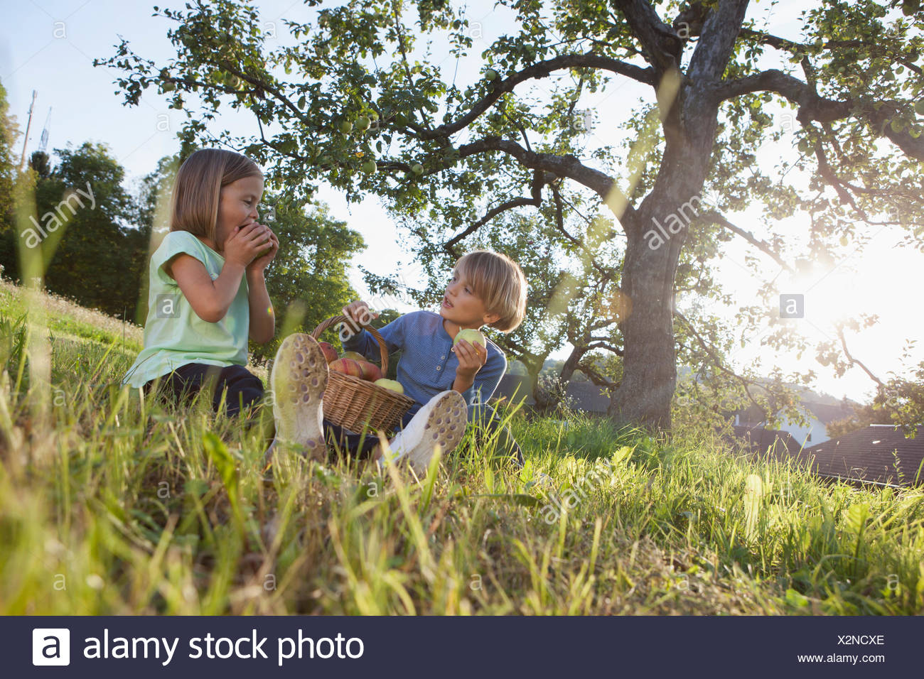 Boy and girl eating apples in meadow - Stock Image