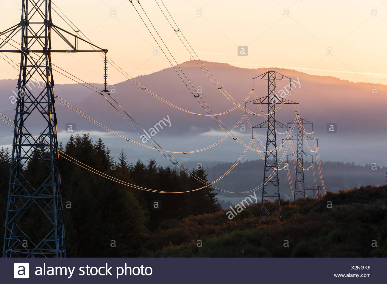 High tension power lines are illuminated by an early morning sunrise.  Duncan, Vancouver Island, British Columbia, Canada. - Stock Image