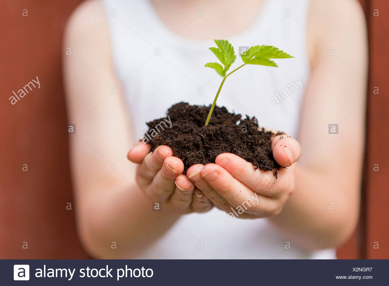 Girl holding seedling outdoors - Stock Image