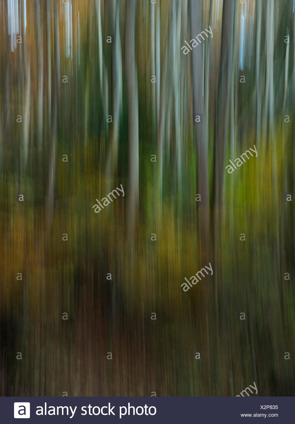 Autumnal forest, mixed forest, blurred, abstract, Bavaria - Stock Image