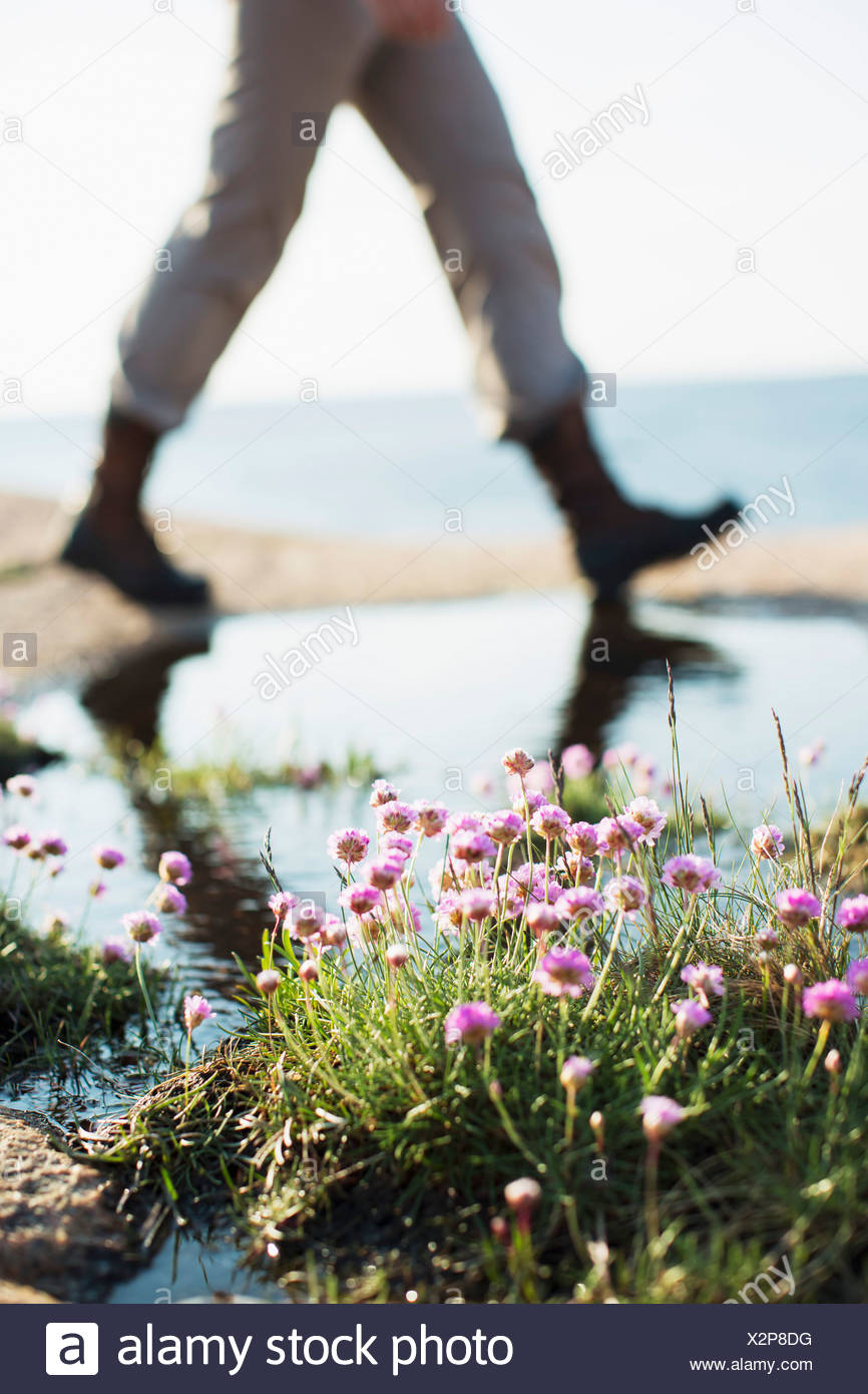 Wildflowers with woman walking in background at seaside - Stock Image