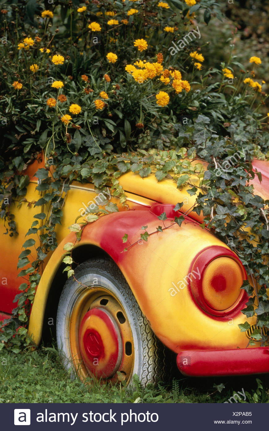 discarded VW Beetle, brightly painted, as of a flower trough, ivy ...