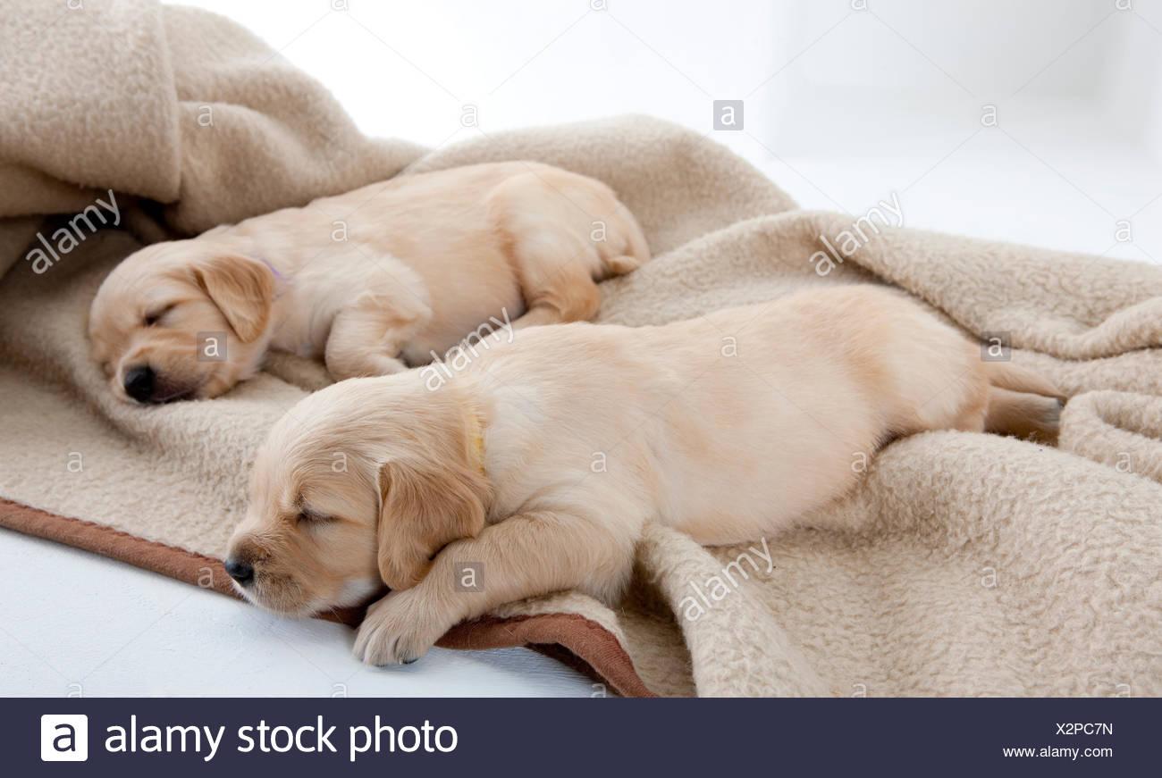dog inside animal - Stock Image