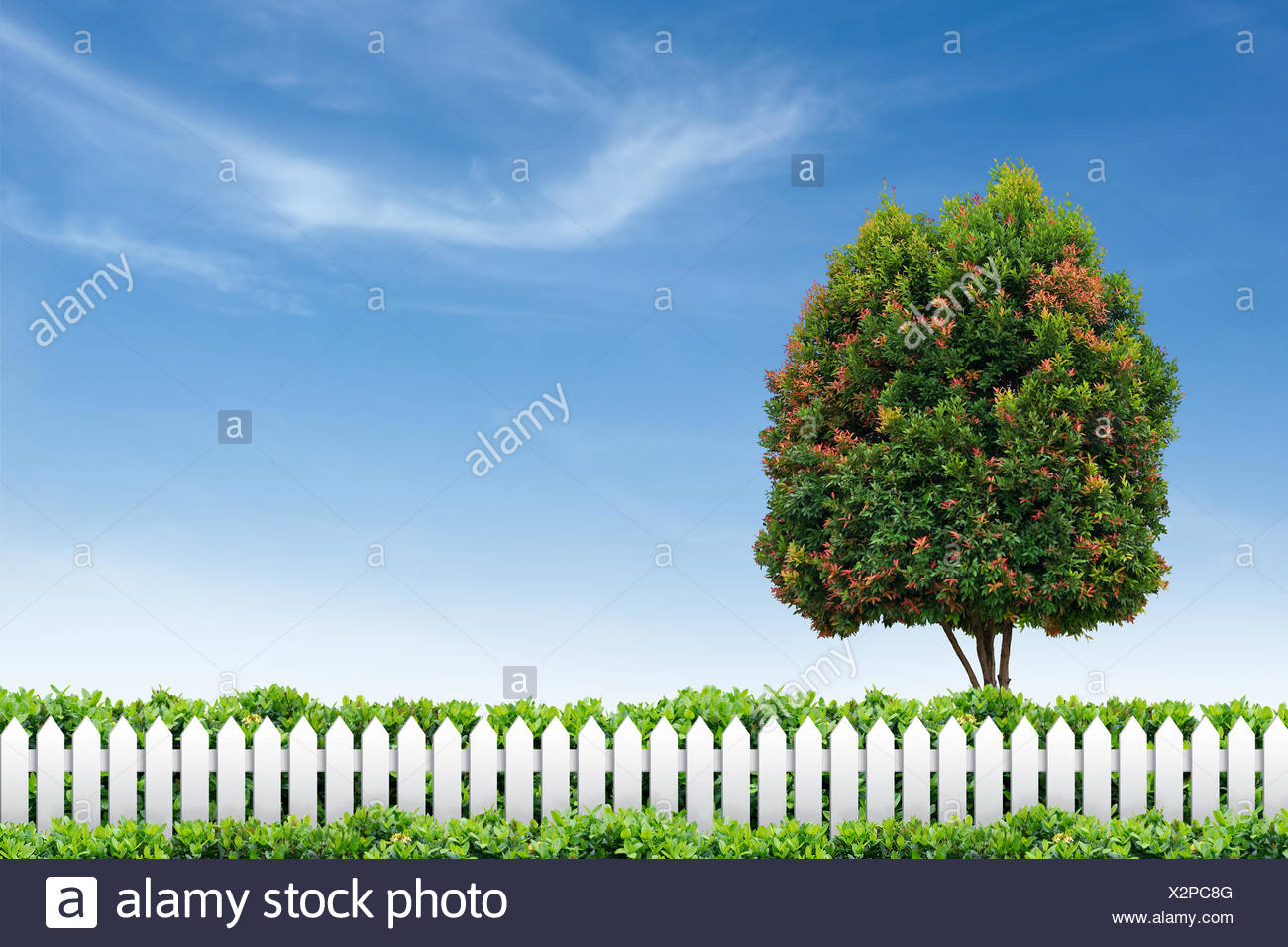 tree summer summerly - Stock Image