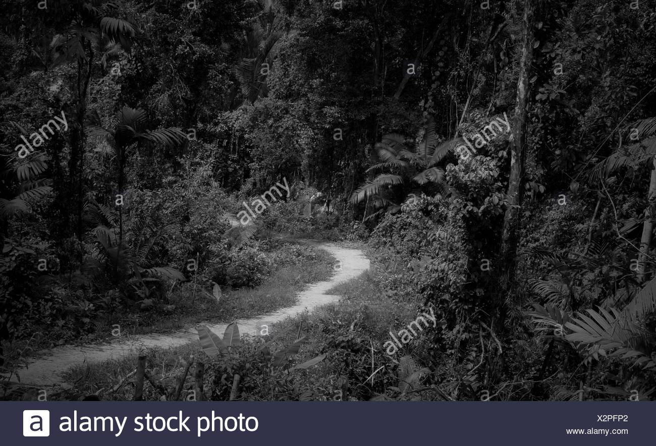 Narrow Trails Along Trees On Countryside Landscape - Stock Image