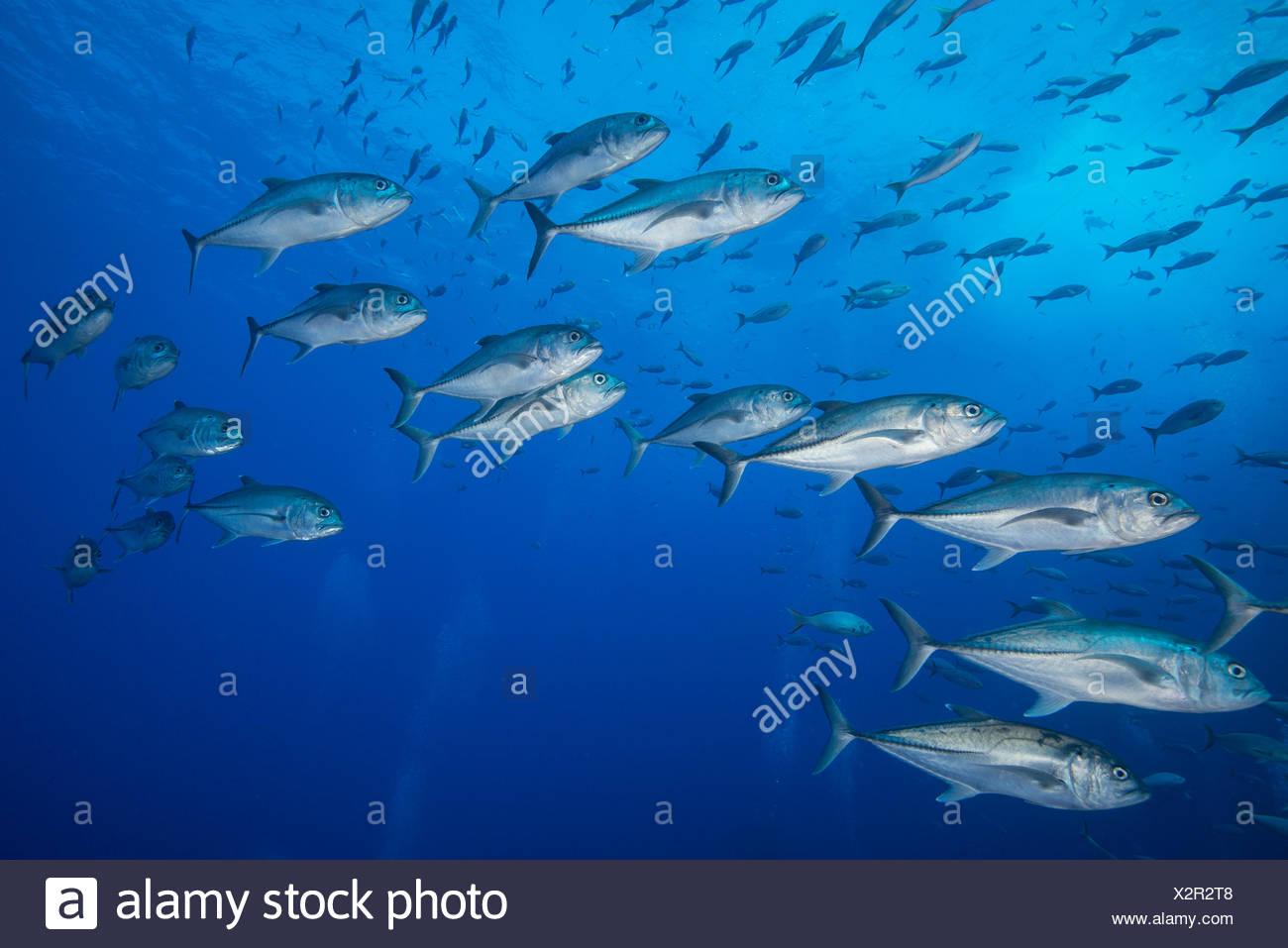 Blue eyed fish stock photos blue eyed fish stock images for One eyed fish