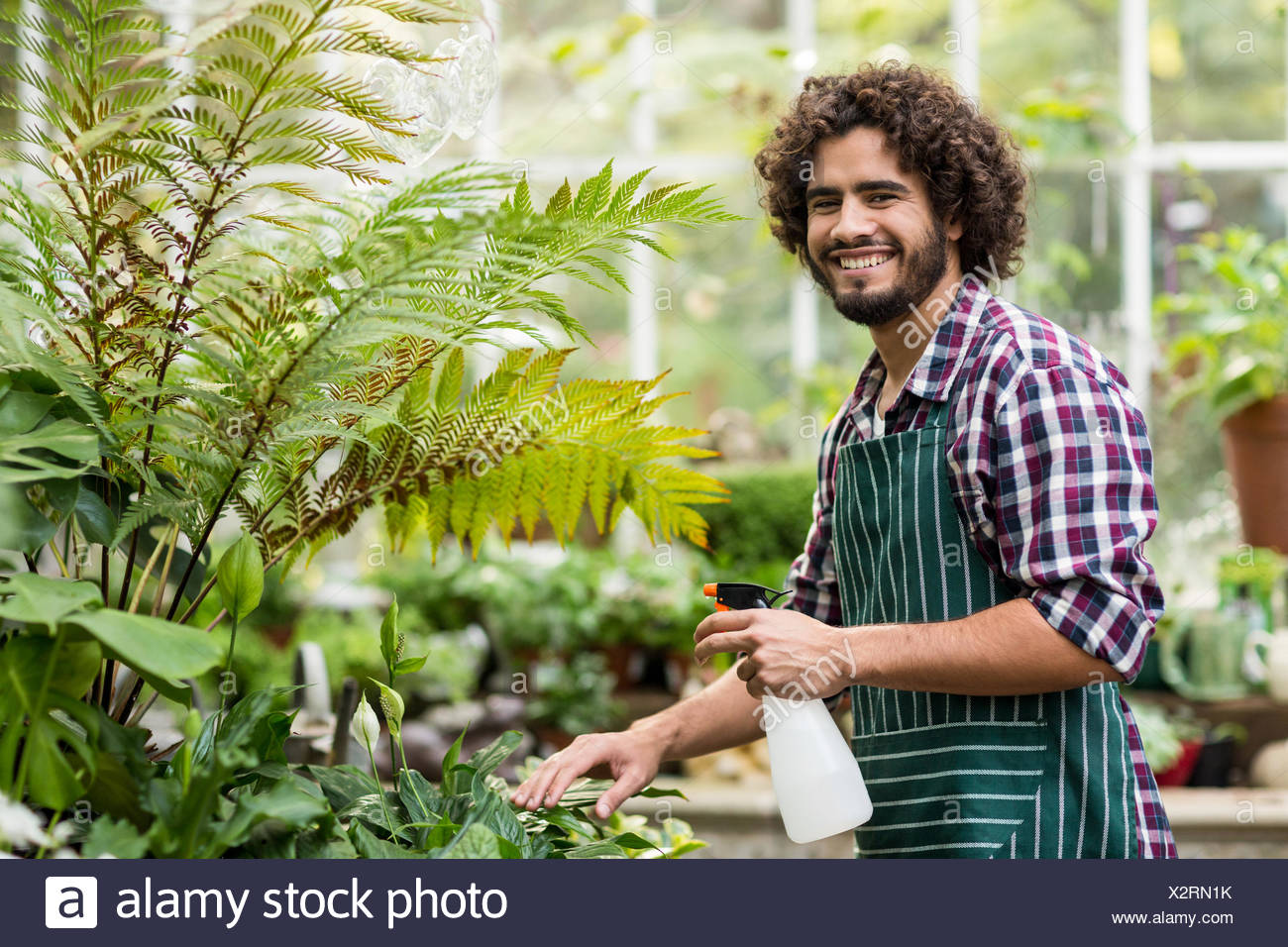 Happy male gardener watering plants - Stock Image