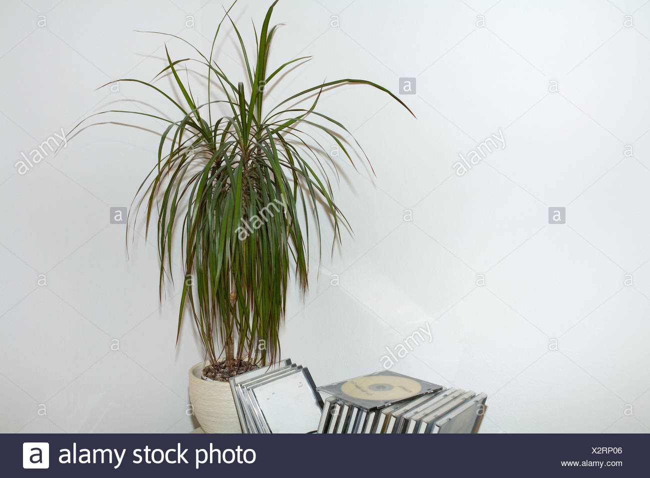 Pot plant and compact discs - Stock Image
