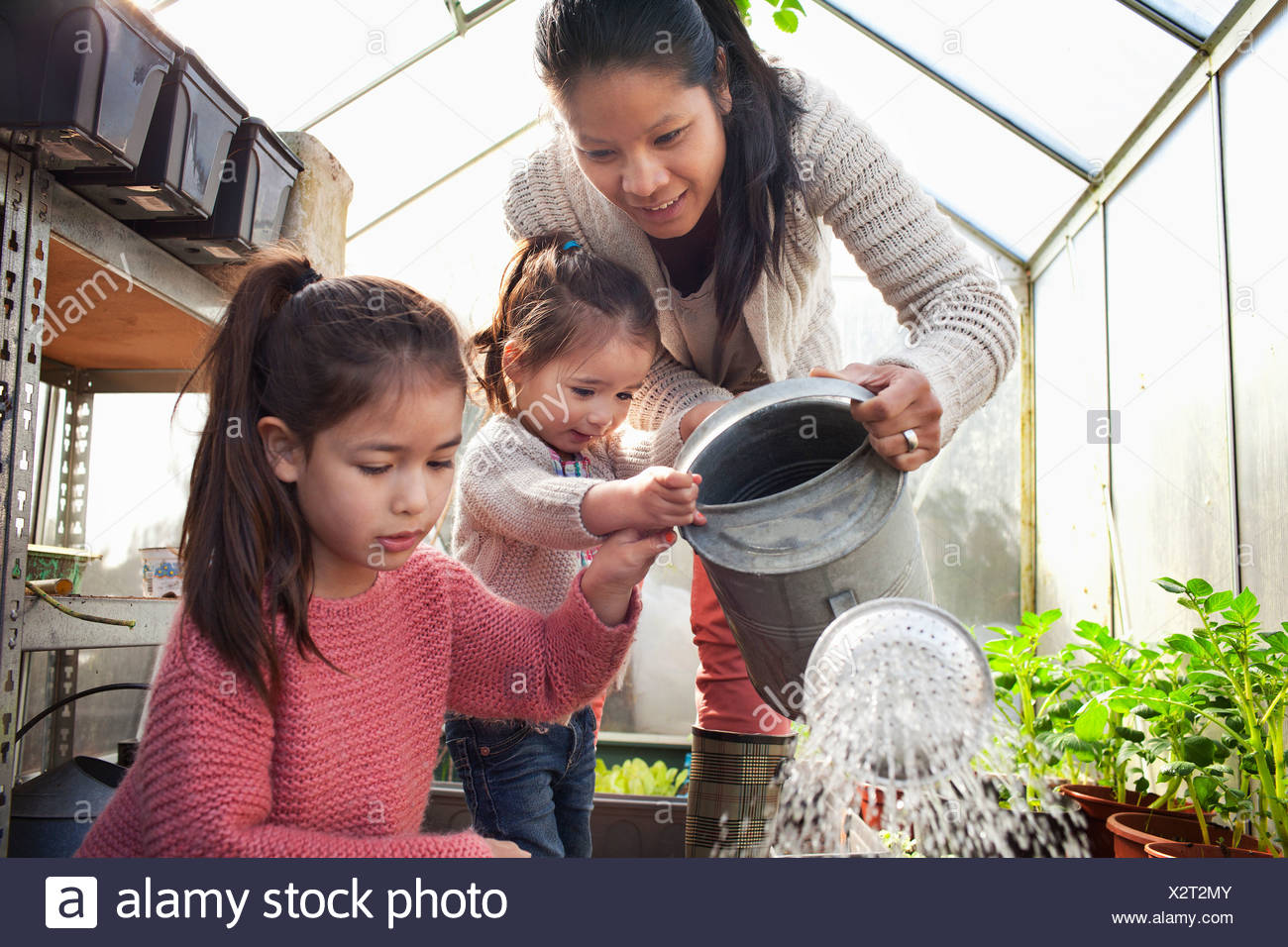 Mother and daughters watering plants in greenhouse - Stock Image