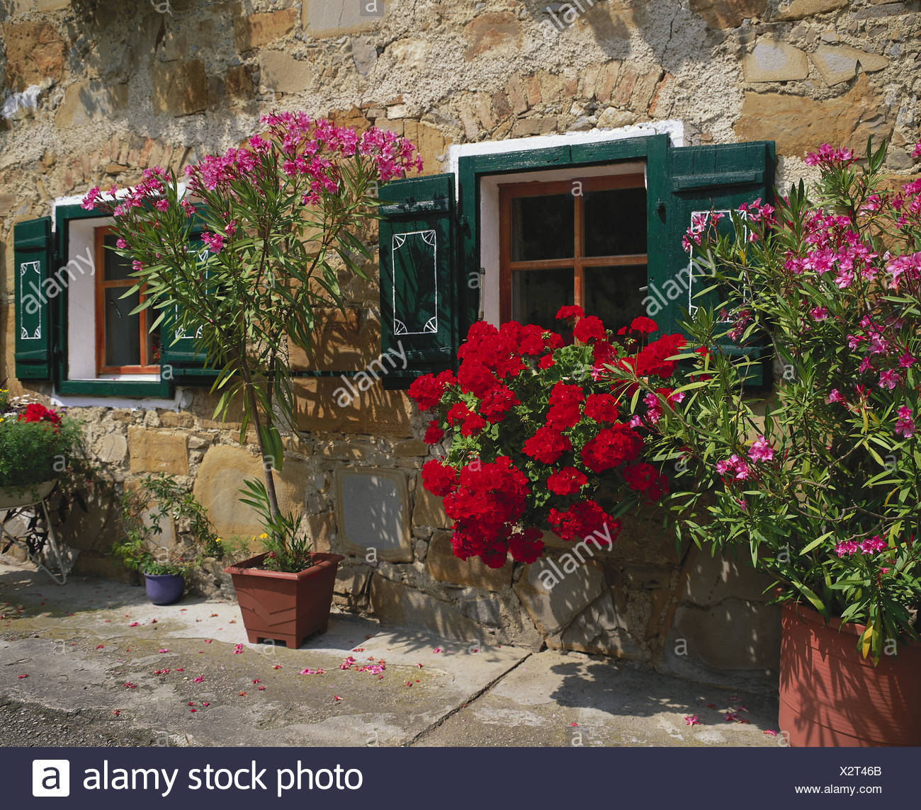 House, facade, flowers, windows, window box, geraniums, flowerpots, oleanders, floral decoration, residential house, stone house, potted plants, summers, - Stock Image