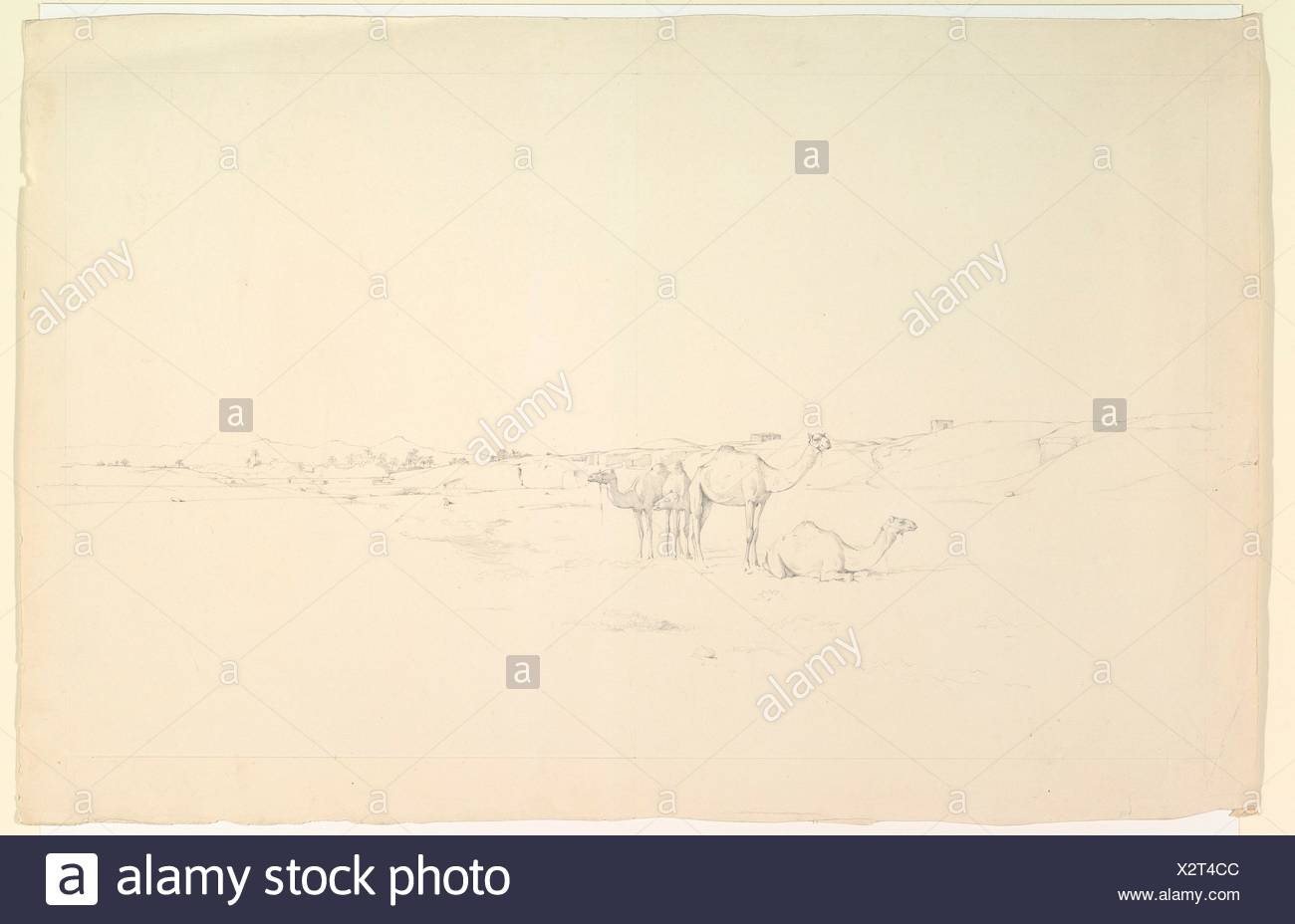 Camels in a landscape. Artist: Howard Carter (British, London 1873-1939 London); Date: late 19th-mid-20th century; Medium: Graphite; Dimensions: - Stock Image