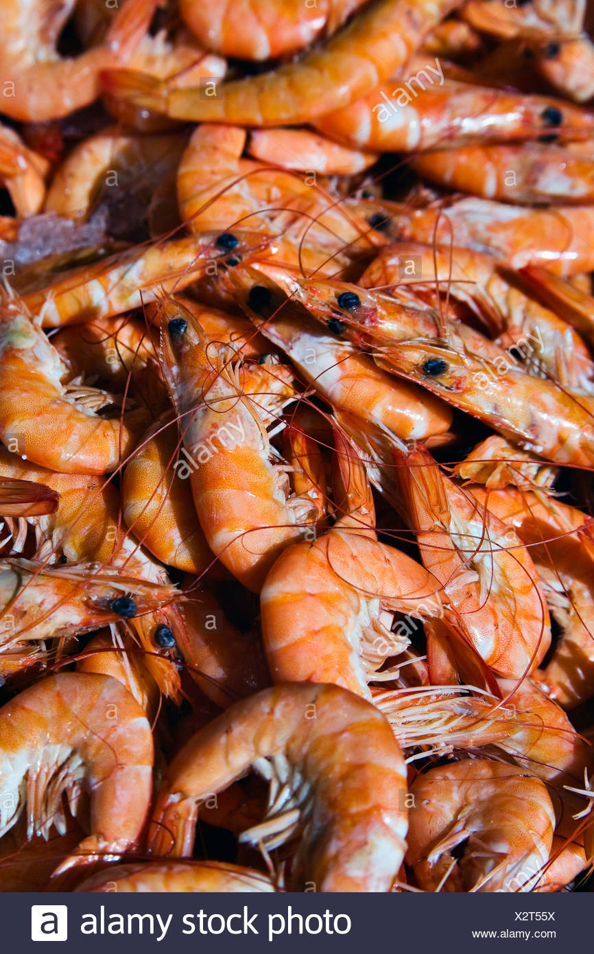 Gamberetti shrimp - Stock Image
