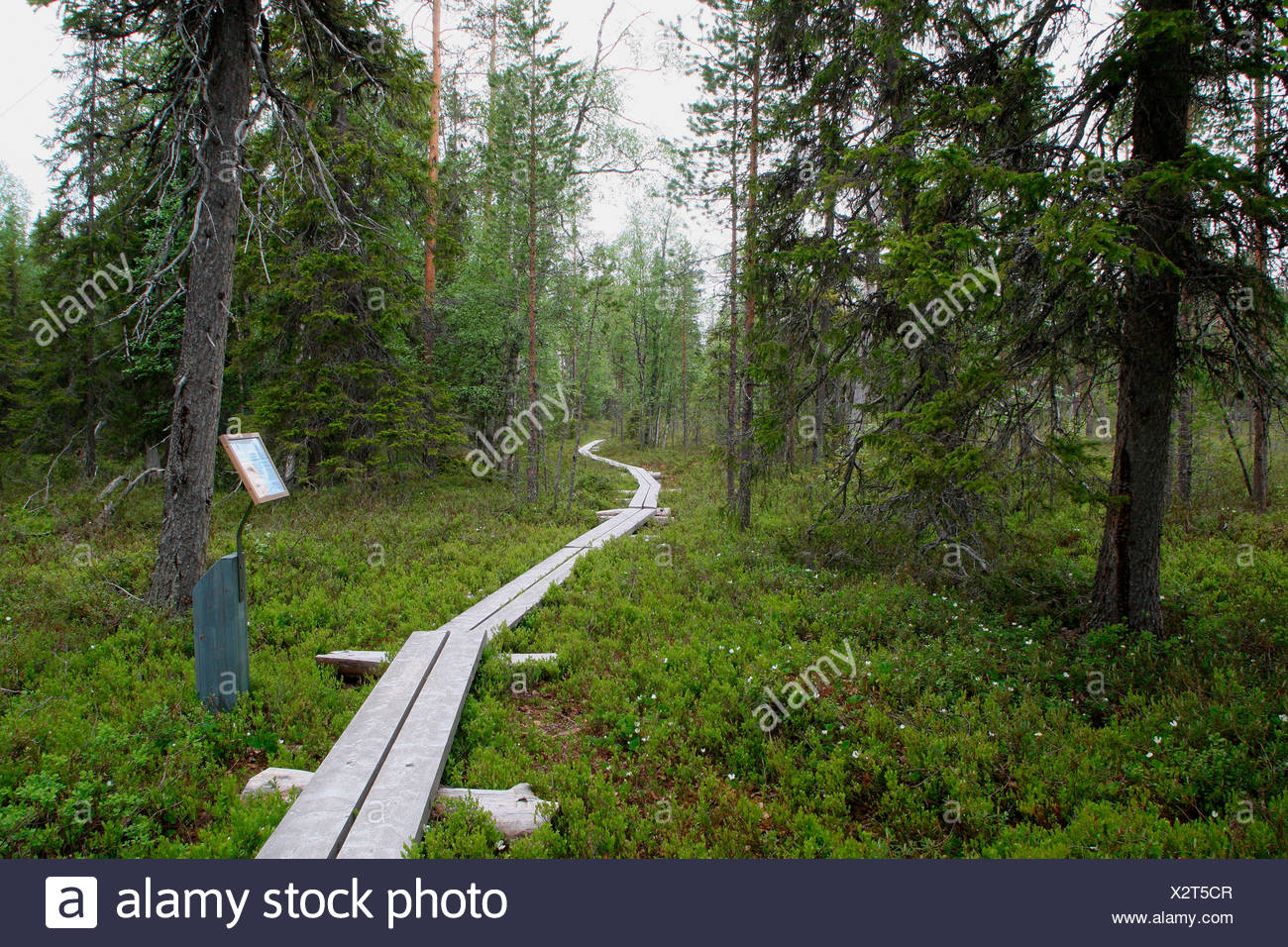 Hiking trail in Oulanka National Park, Lapland, Finland, Europe - Stock Image