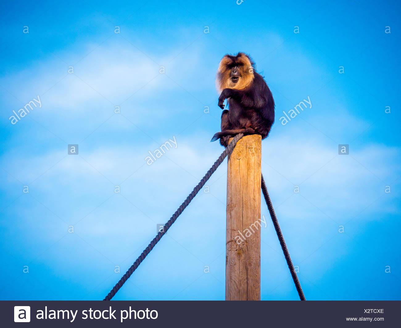 Monkey Sitting On Wooden Post - Stock Image