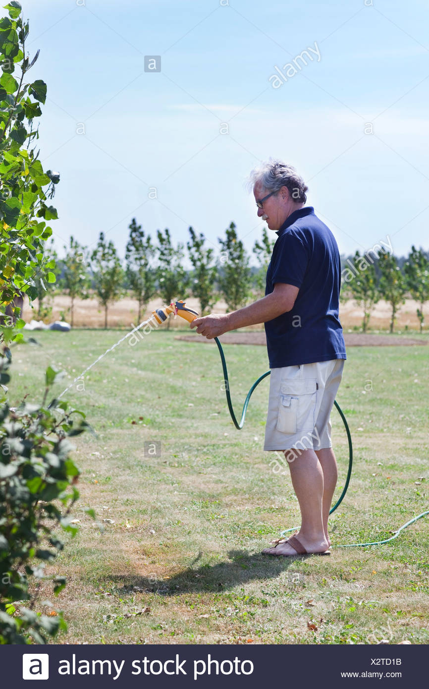 Man taking care of the garden - Stock Image