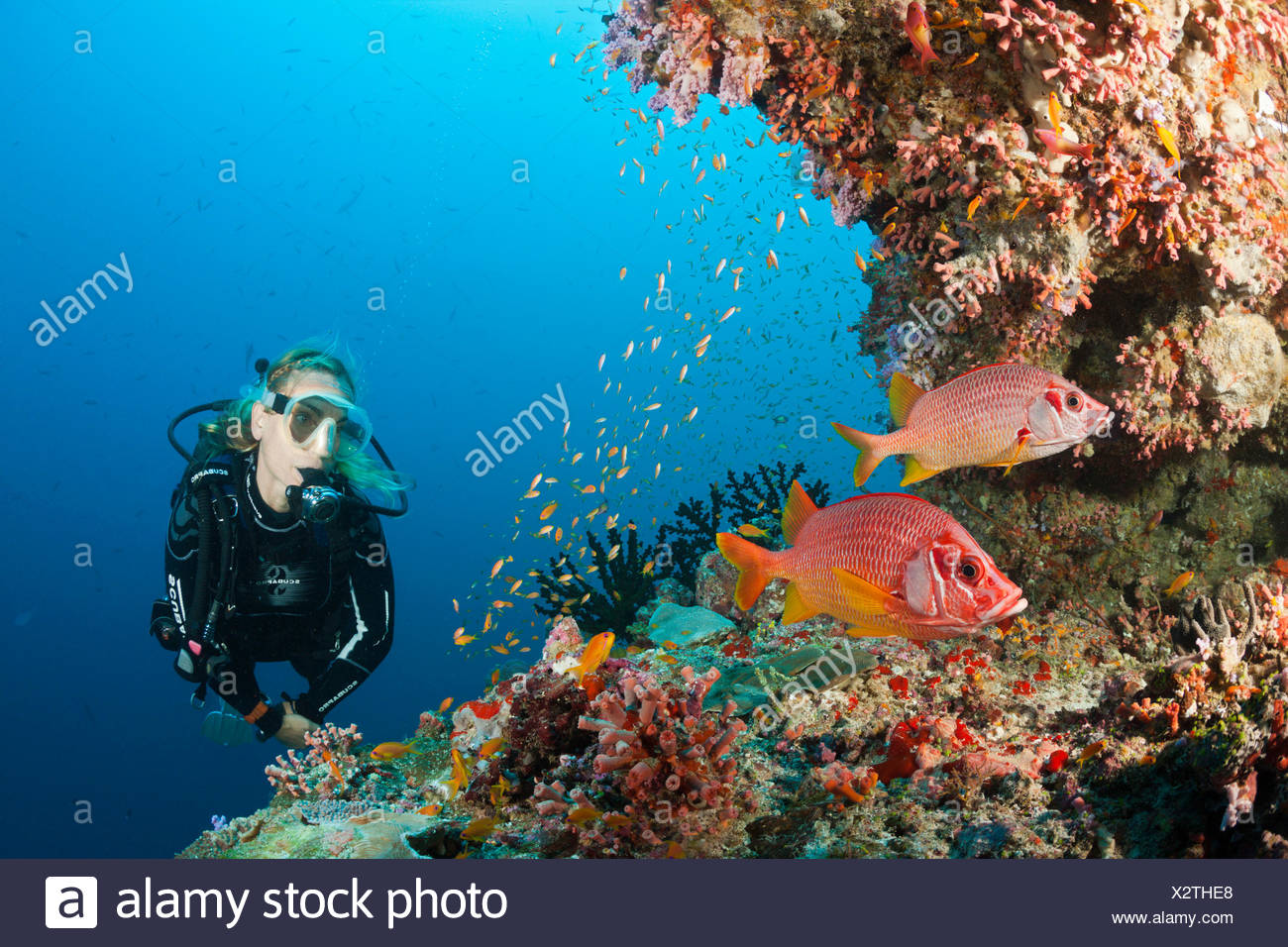 Scuba Diver on Coral Reef, Felidhu Atoll, Maldives - Stock Image