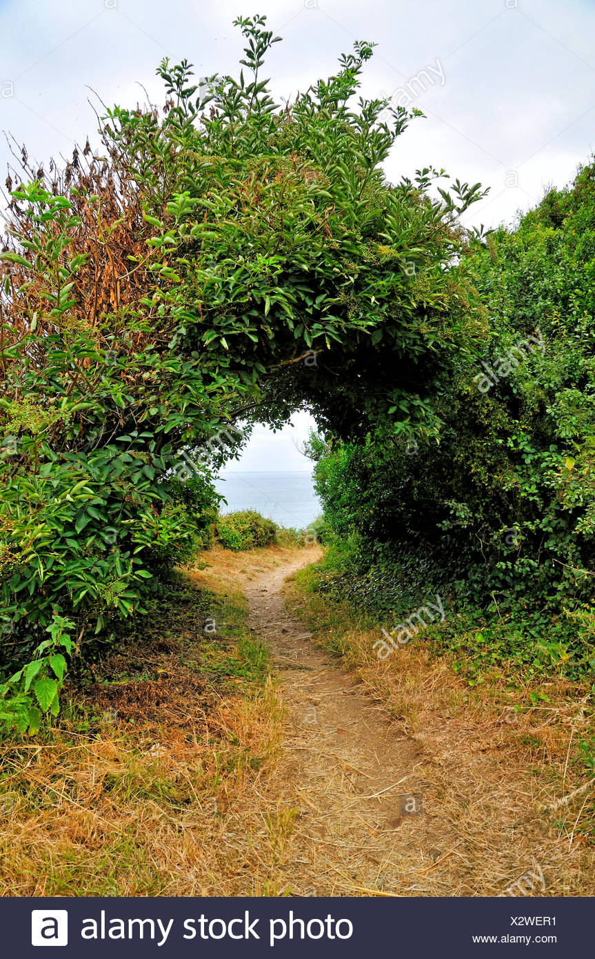 passage through shrubs at coastal walking trail GR34 at the Breton coast, France, Brittany, D�partement C�tes-d�Armor, Pl�neuf-Val-Andr� - Stock Image