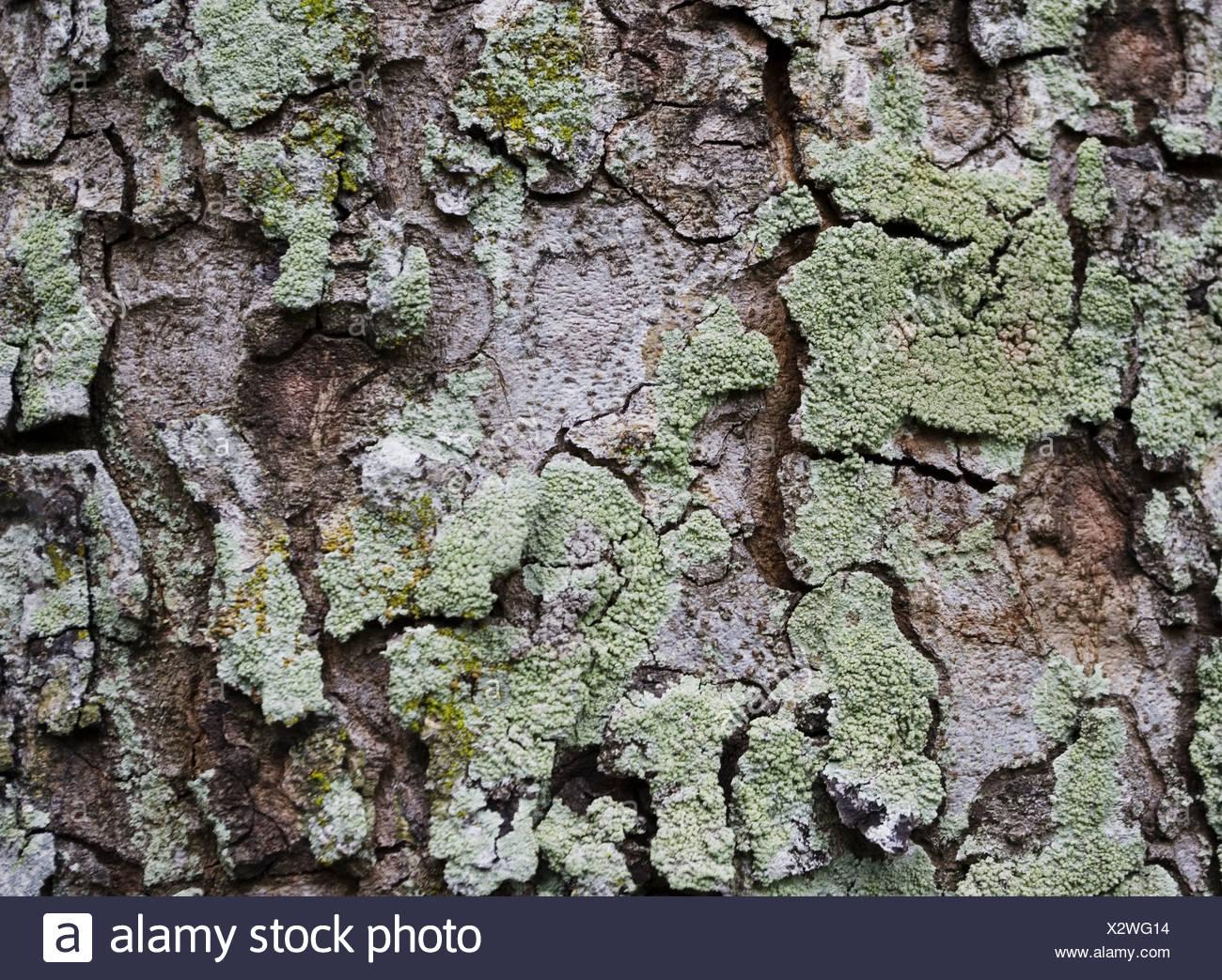 Close Up Oak Tree Trunk Stock Photos & Close Up Oak Tree Trunk Stock ...