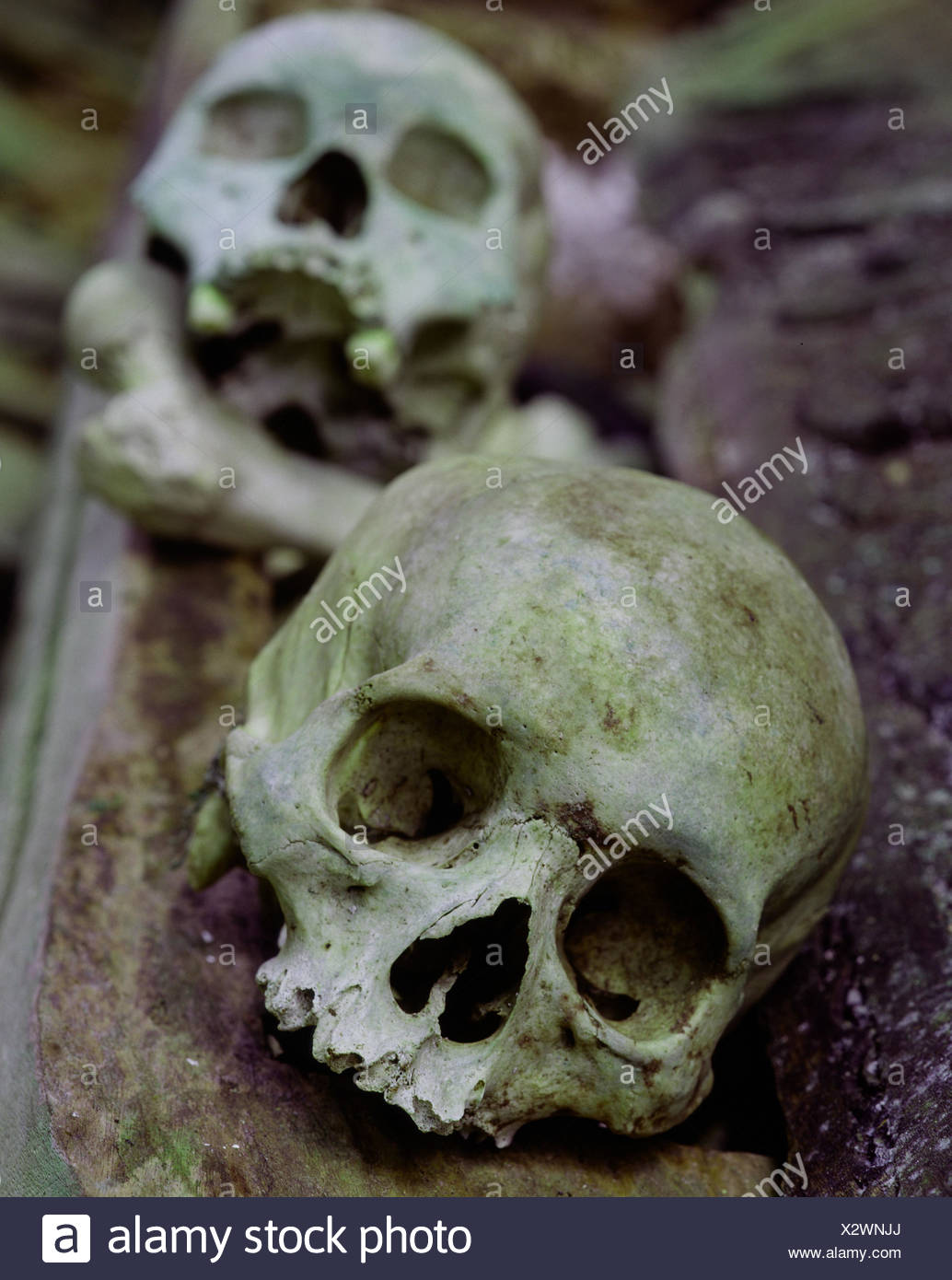 Indonesia, Kete-Kesu, goal nanny's tomb, detail, dead person's skull, South-East Asia, island state, Celebes, Rantepao, forefather tombs, forefather tomb, tomb, tomb, skull, skeleton leftovers, humanely, cult the dead, ancestor worship, funerals, primitiv - Stock Image