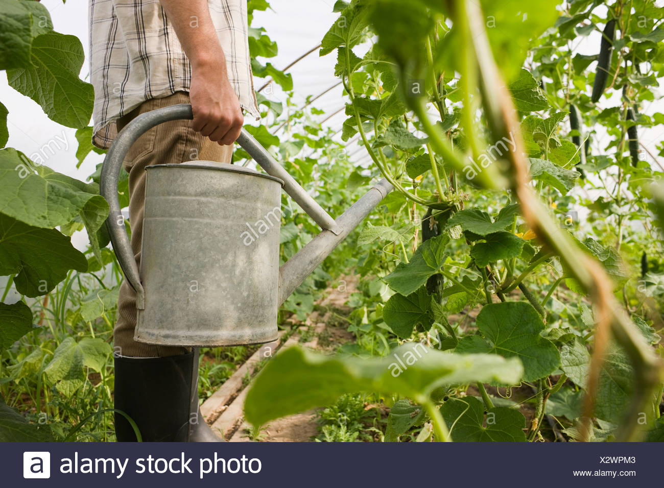 Person in greenhouse holding watering can, side view Stock Photo