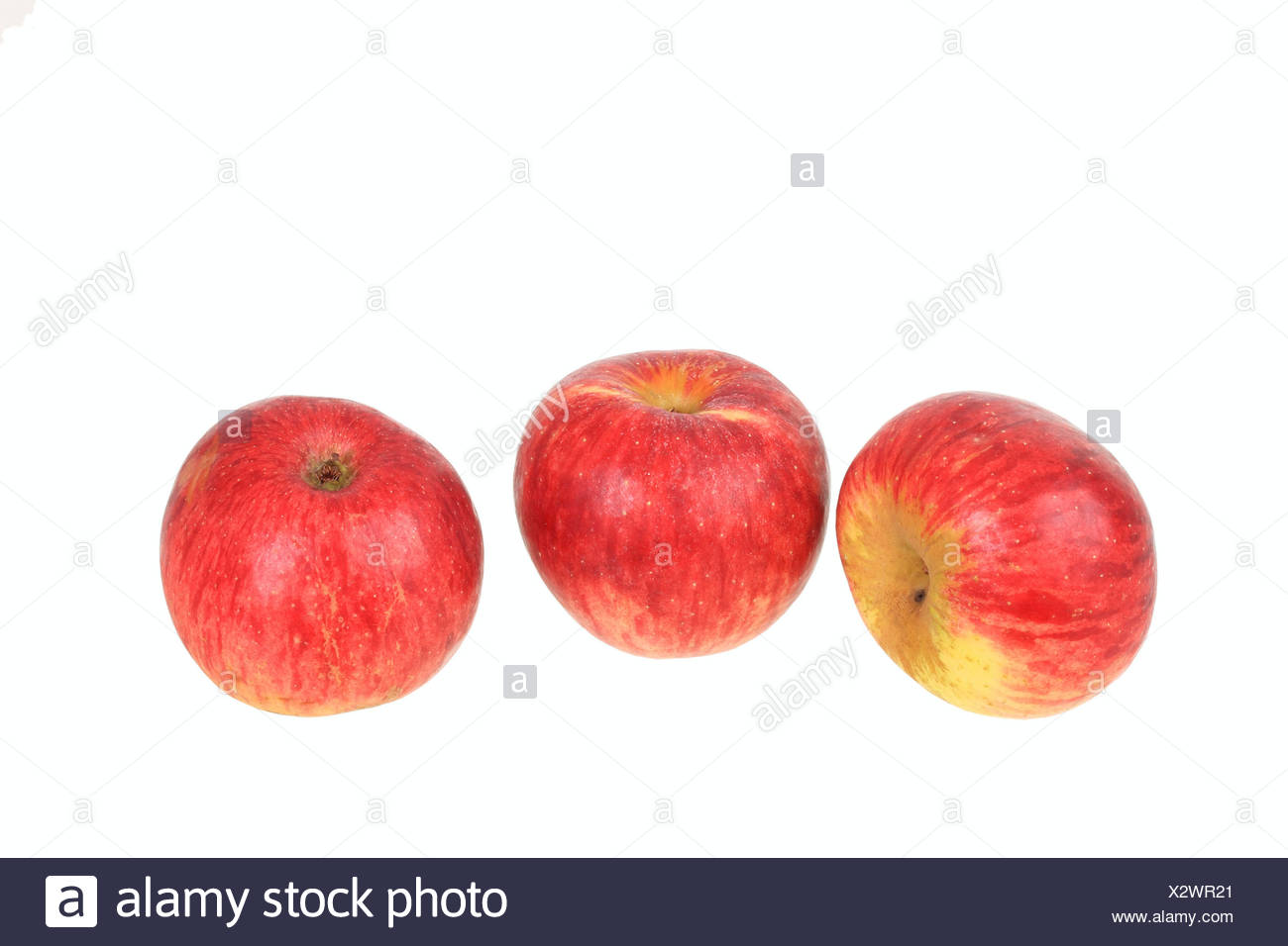 Apples, Gewuerzluiken variety, traditional sort for producing cider - Stock Image
