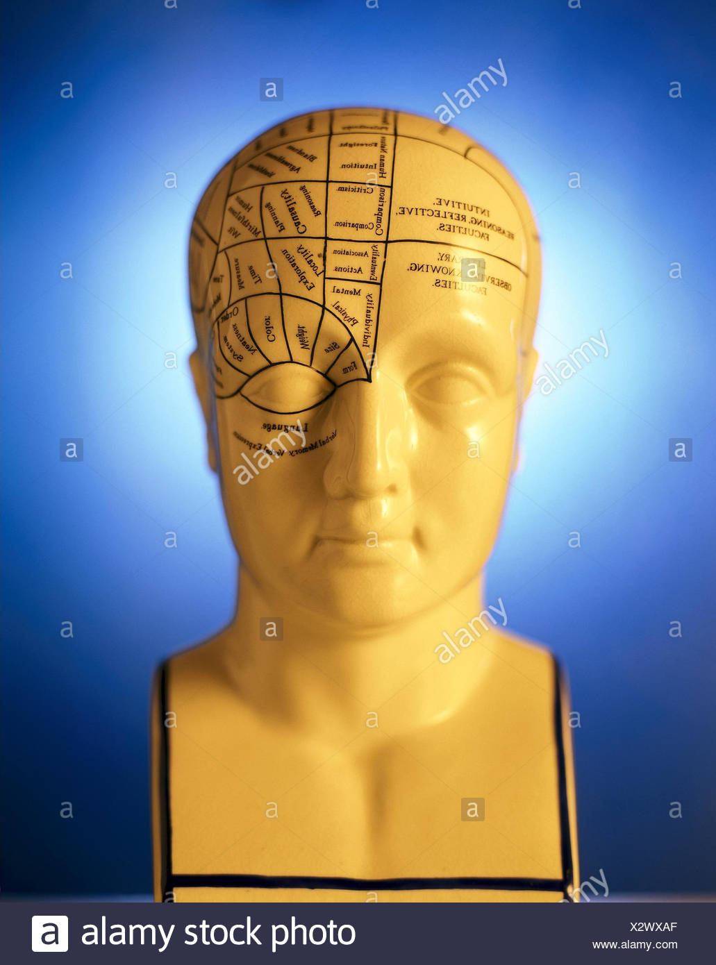 Medicine, model head, marks, brain functions medicine, science, head, model, show model, teaching model, head model, representation, division, functions, brain capacity, brain, ranges, brain cuts, teaching material, competence, illustrative material, object photography, still life - Stock Image