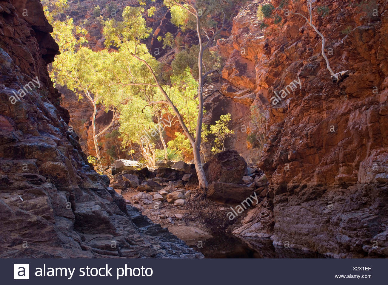 towering red cliffs at the entrance of Serpentinge Gorge and a semi-permanent waterhole, Australia, Northern Territory, West MacDonnell National Park, Serpentine Gorge - Stock Image