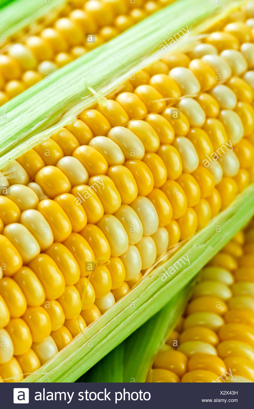 vegetable ears corn - Stock Image