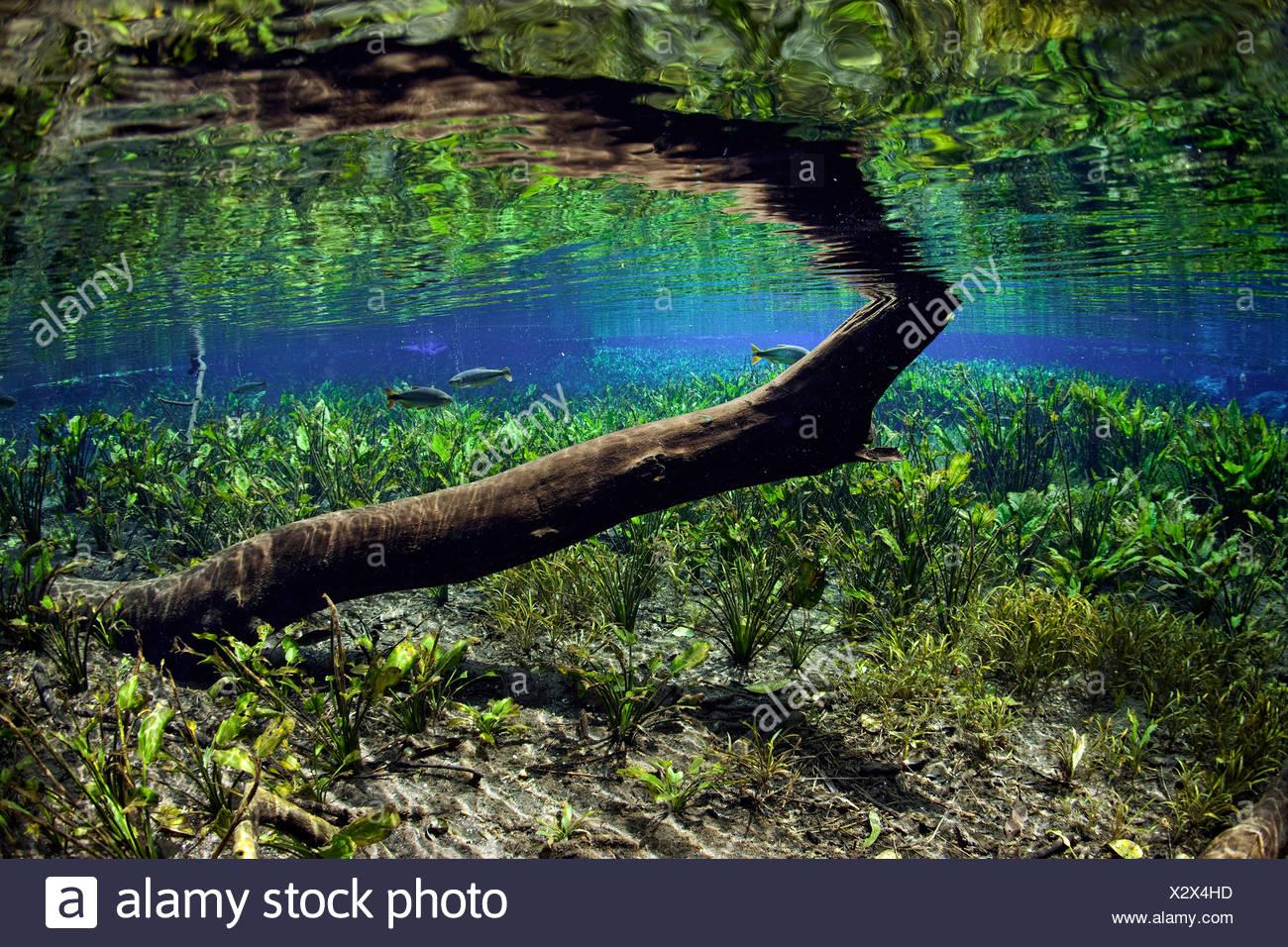 impressions of aquario natural spring bonito mato grosso do sul