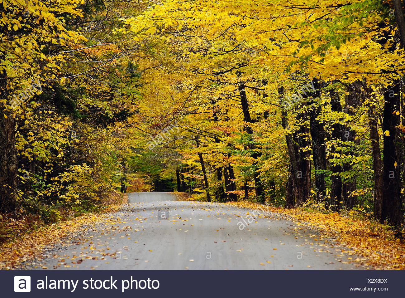 Autumn country road, Vermont, USA - Stock Image