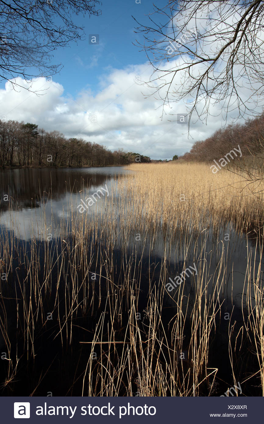 Prerowstrom Stream in the Darsswald, Darss Forest, Prerow estuary, Prerow on Darss, Mecklenburg-Western Pomerania, Germany, Eur - Stock Image