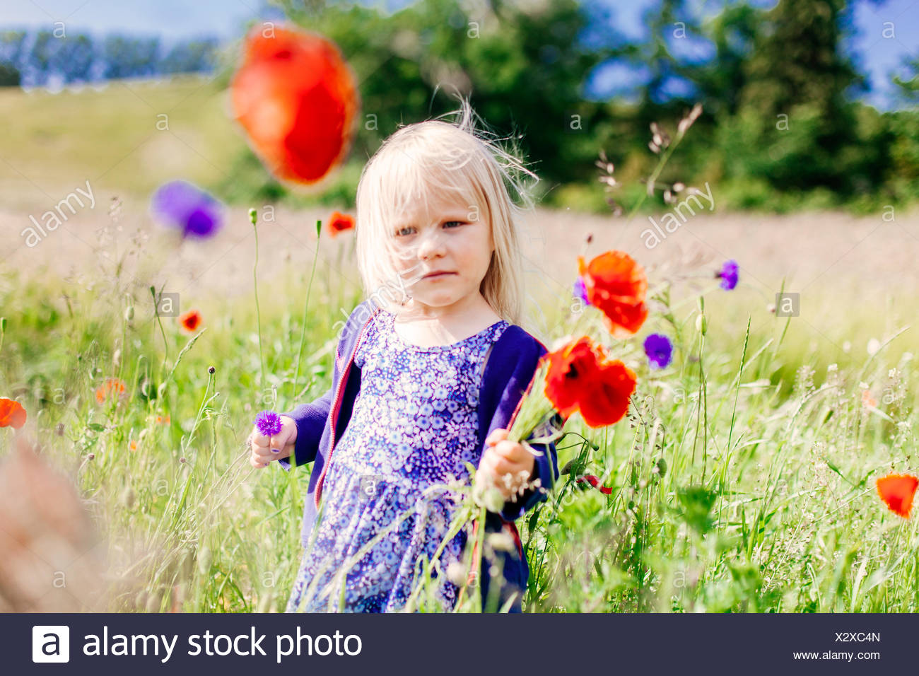 Girl holding poppy flowers at grassy field - Stock Image
