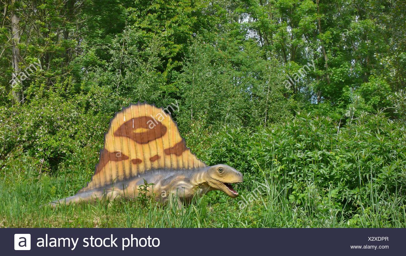 Dimetrodon (Dimetrodon), mammal like reptile - Stock Image