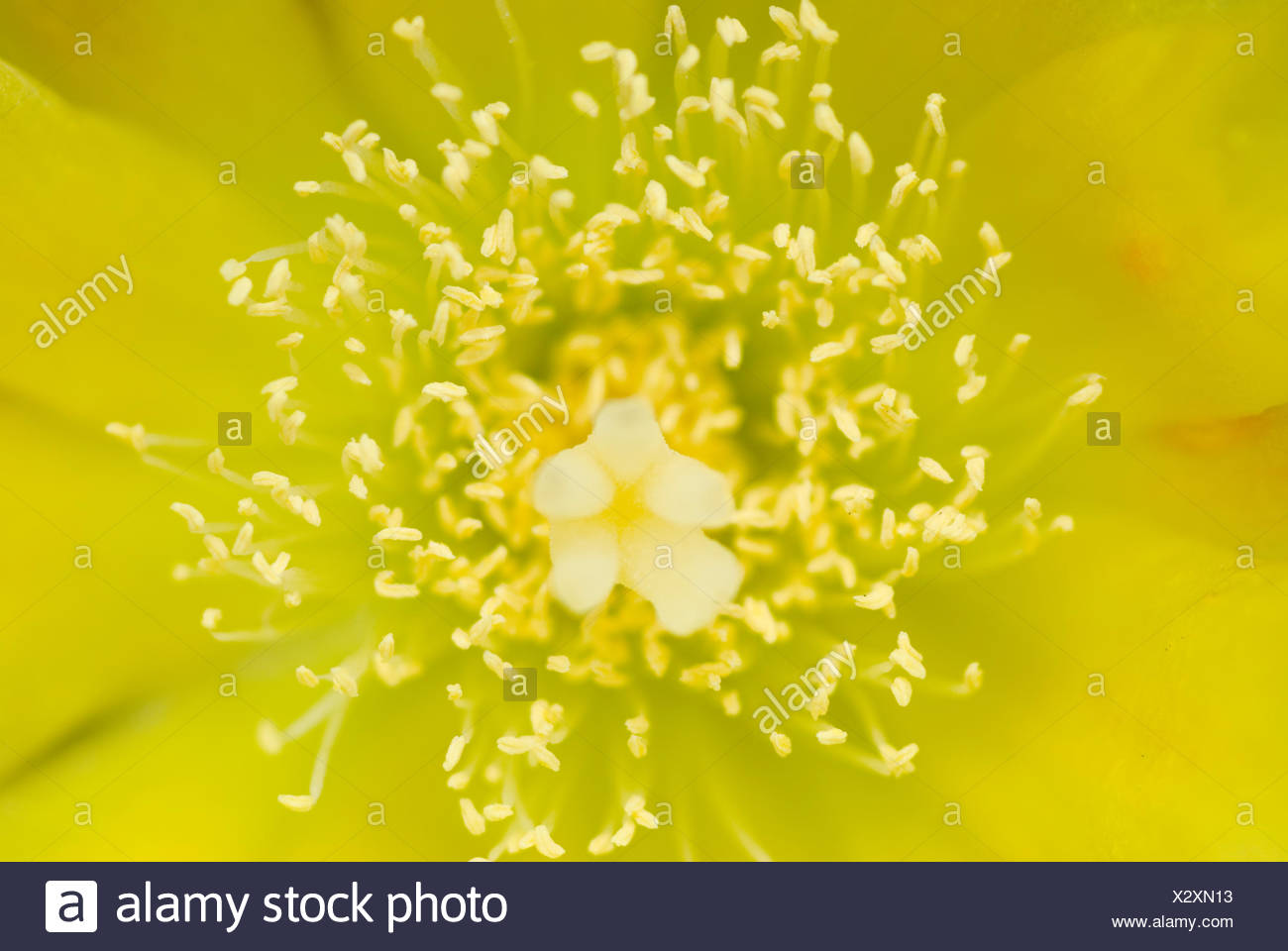 Flower, Pistil and stamen Stock Photo