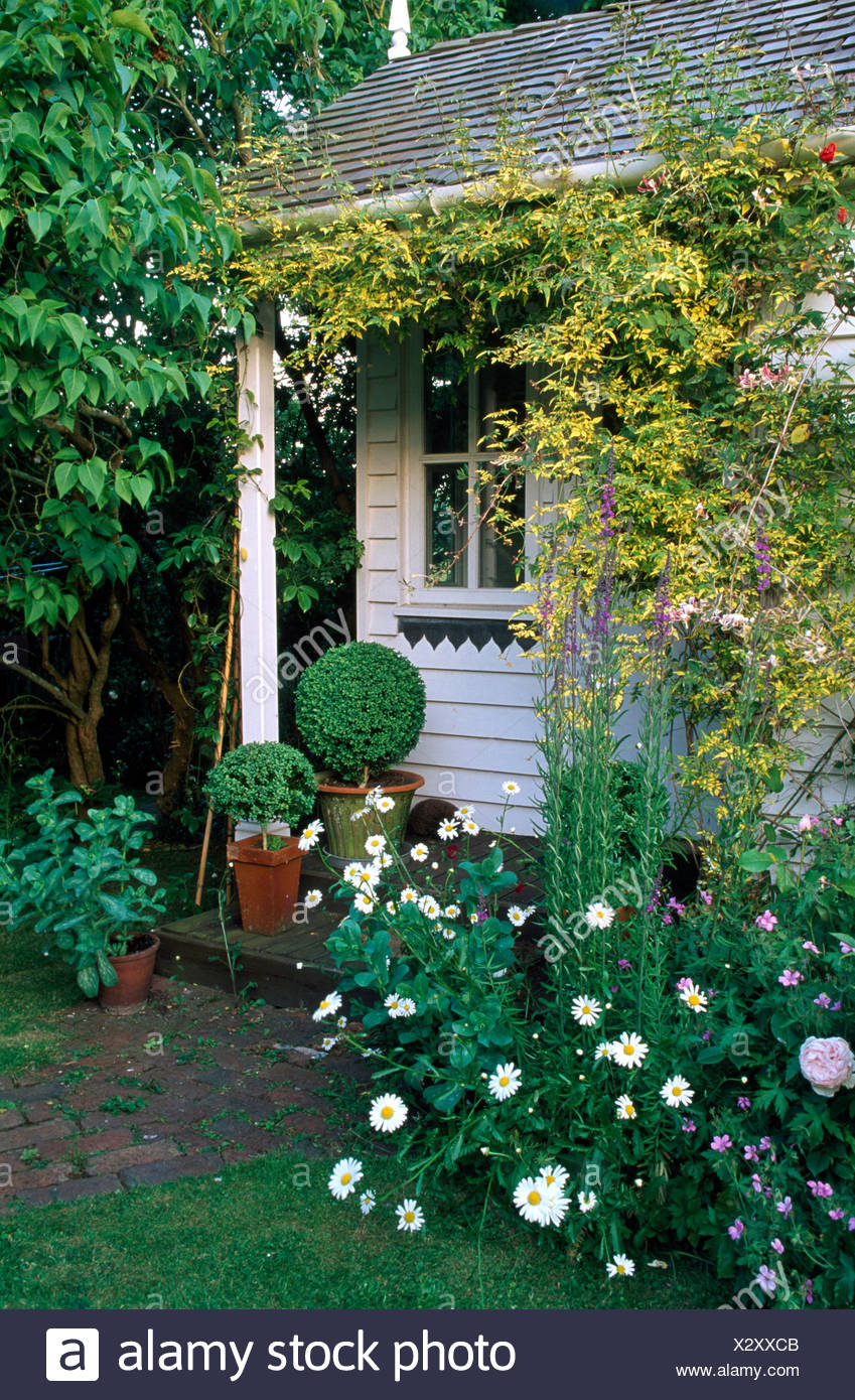 White daisies beside white wooden summerhouse with clipped box in terracotta pots - Stock Image