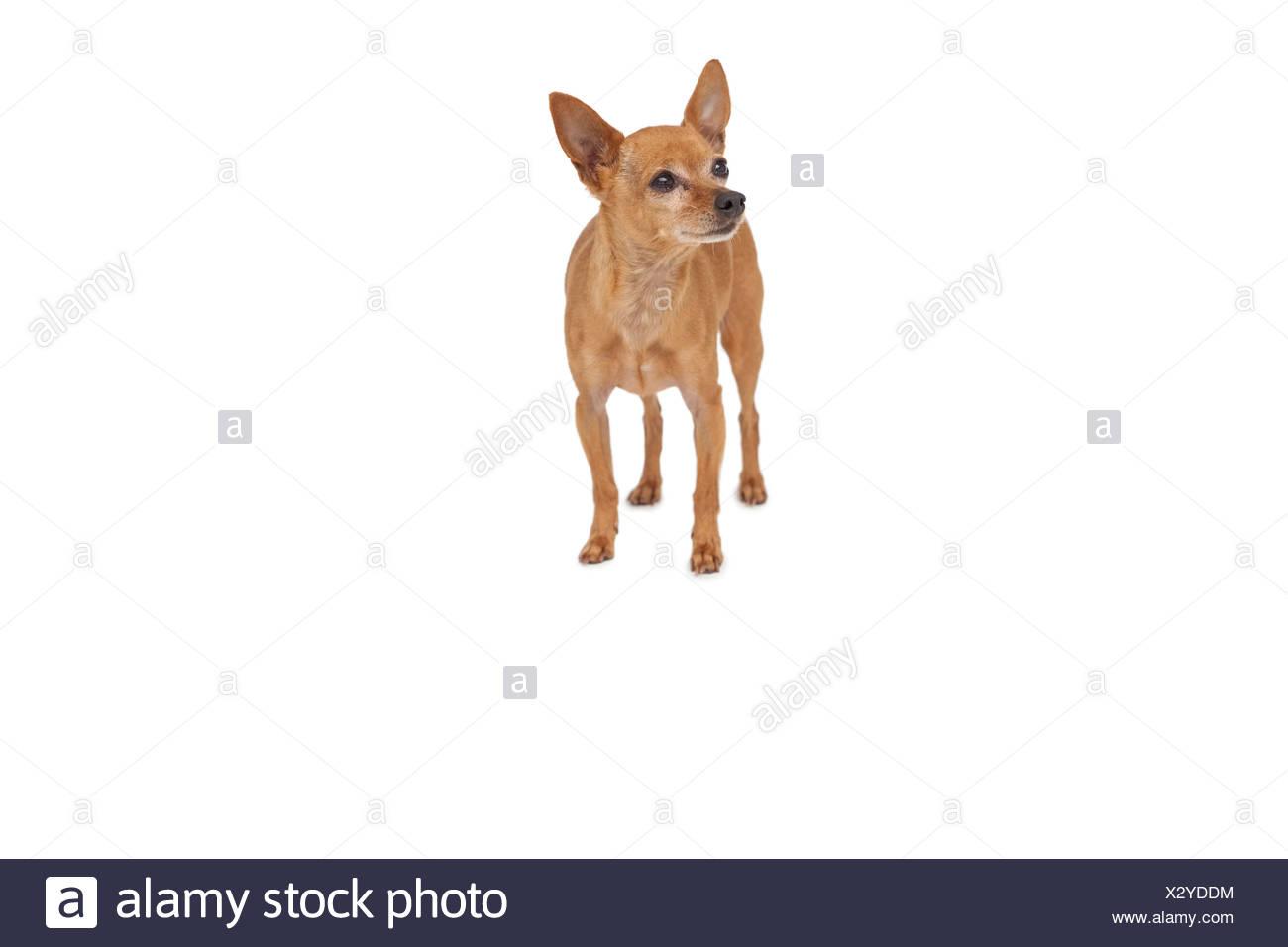 Full length of a pet dog Stock Photo