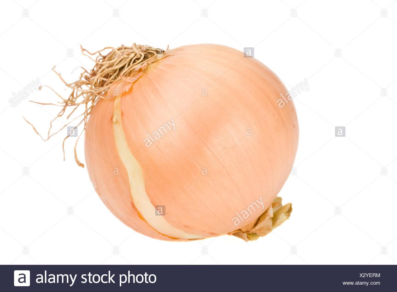 Einzelne Zwiebel auf weißem Hintergrund - Stock Image