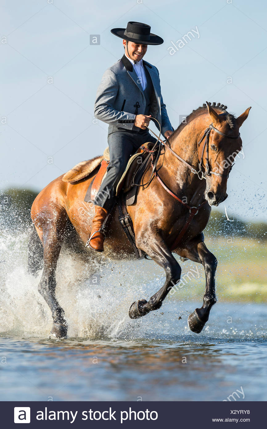 Lusitano. Rider in traditional dress galloping on a bay stallion through water. Portugal - Stock Image