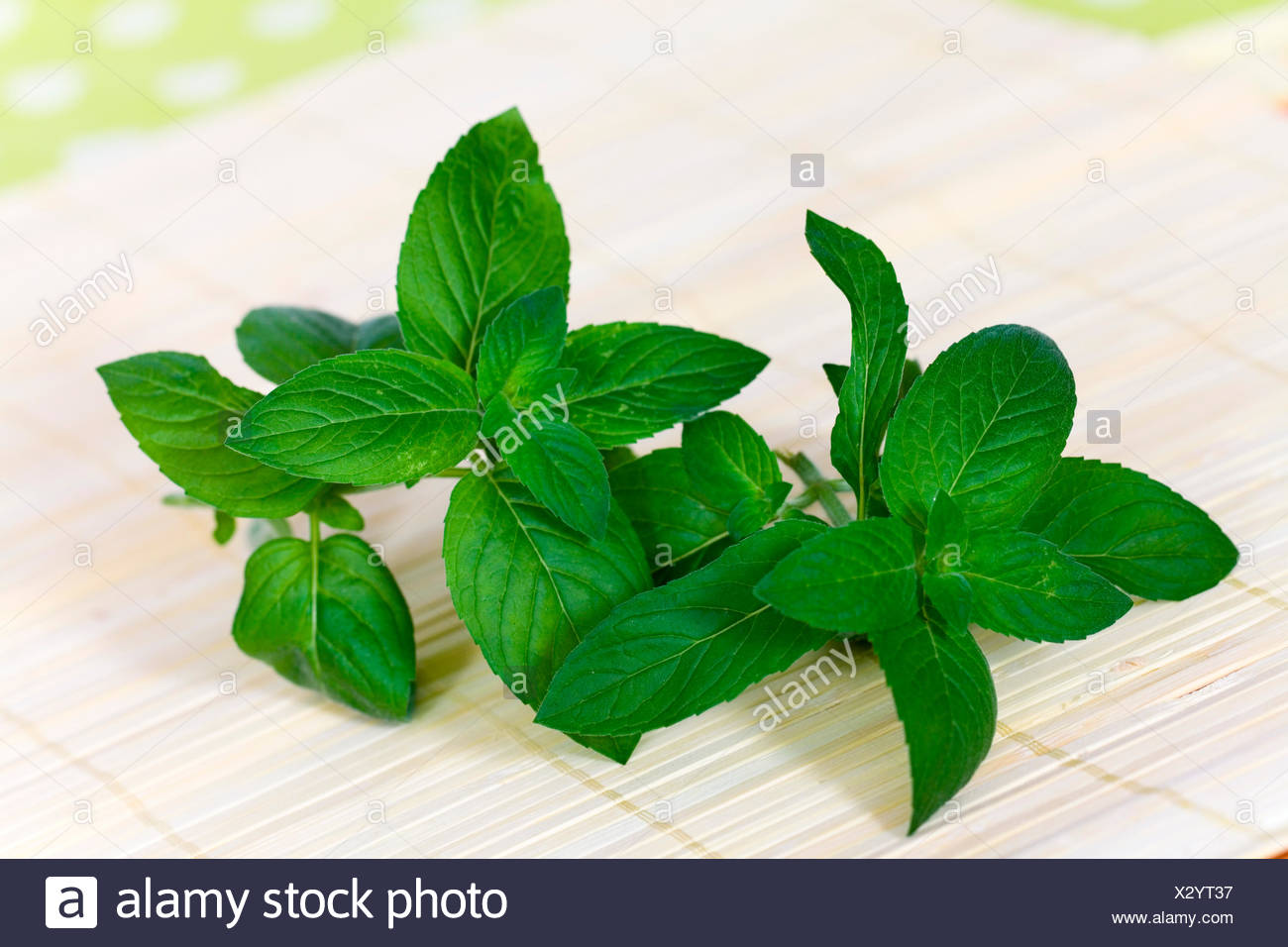 tpeppermint - Stock Image