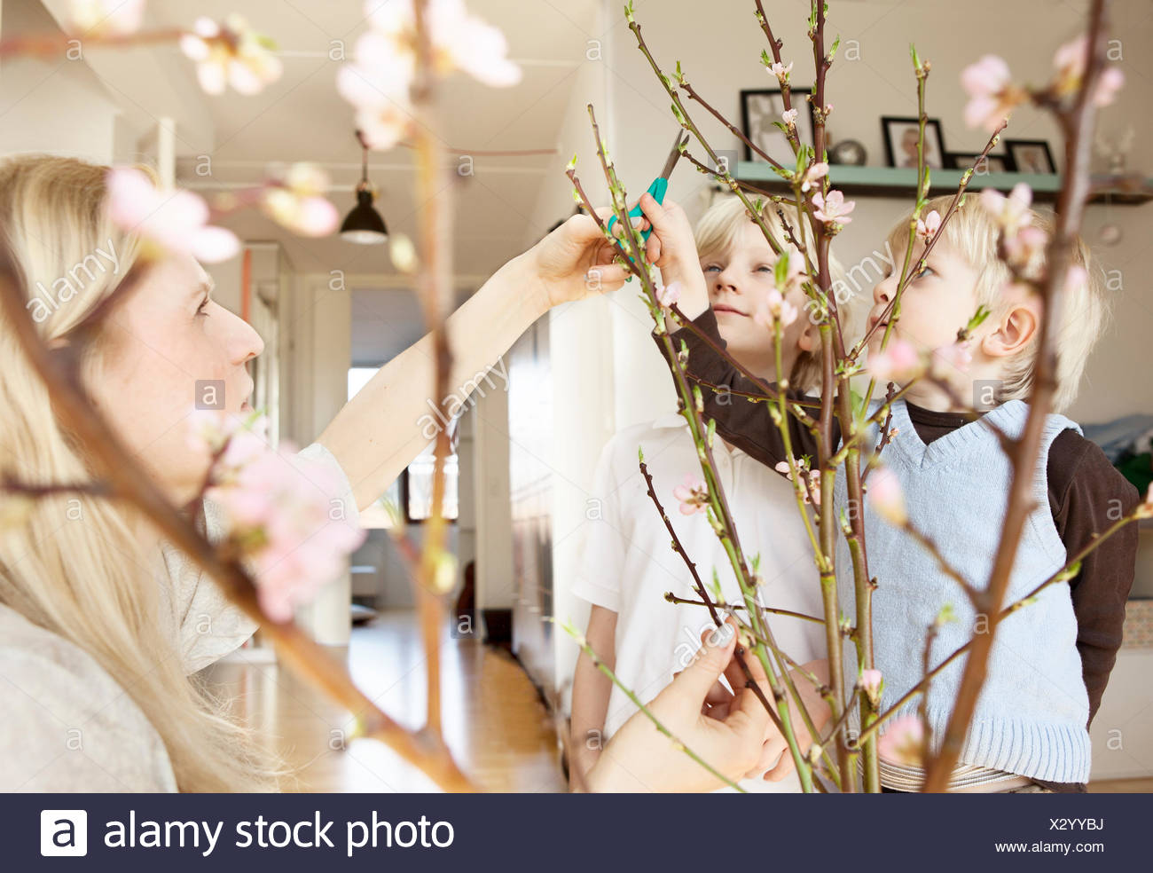 Mid adult mother and two sons trimming blossom twigs in sitting room - Stock Image