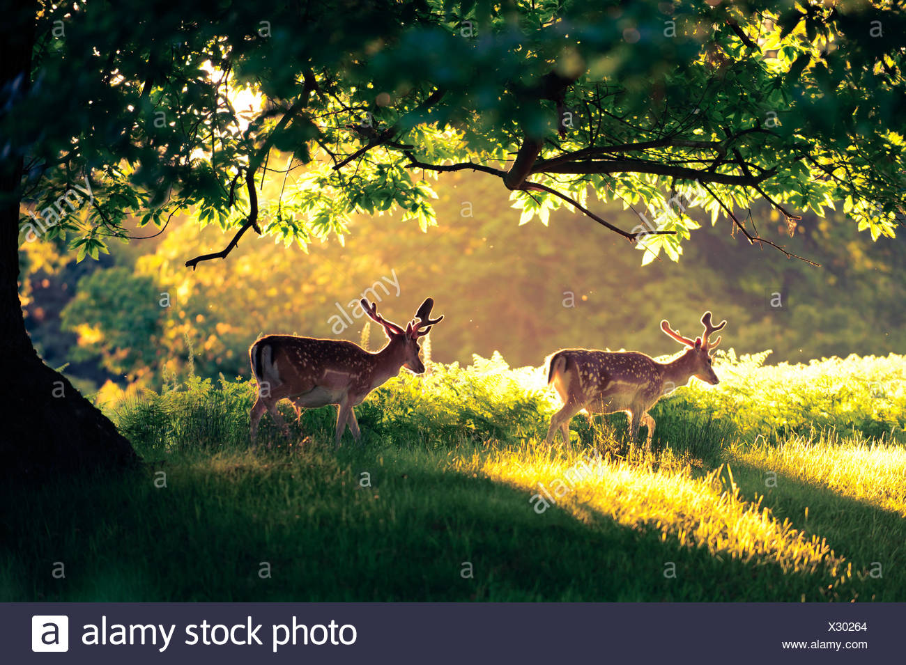 Two deer in the park - Stock Image