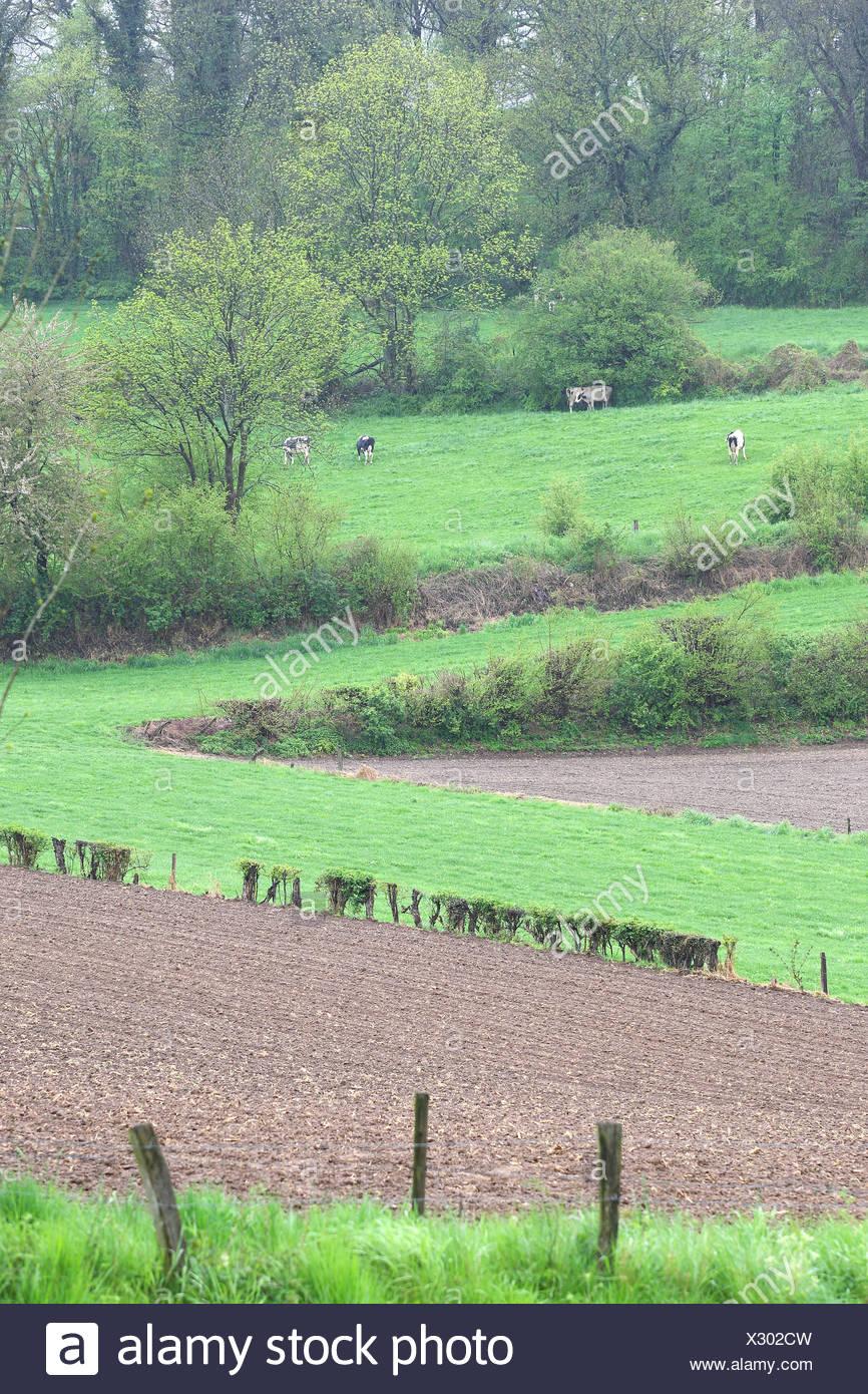 Bocagelandschap met hagen en bomen, Voeren, Belgi Bocage landscape with hedges and trees, Voeren, Belgium - Stock Image