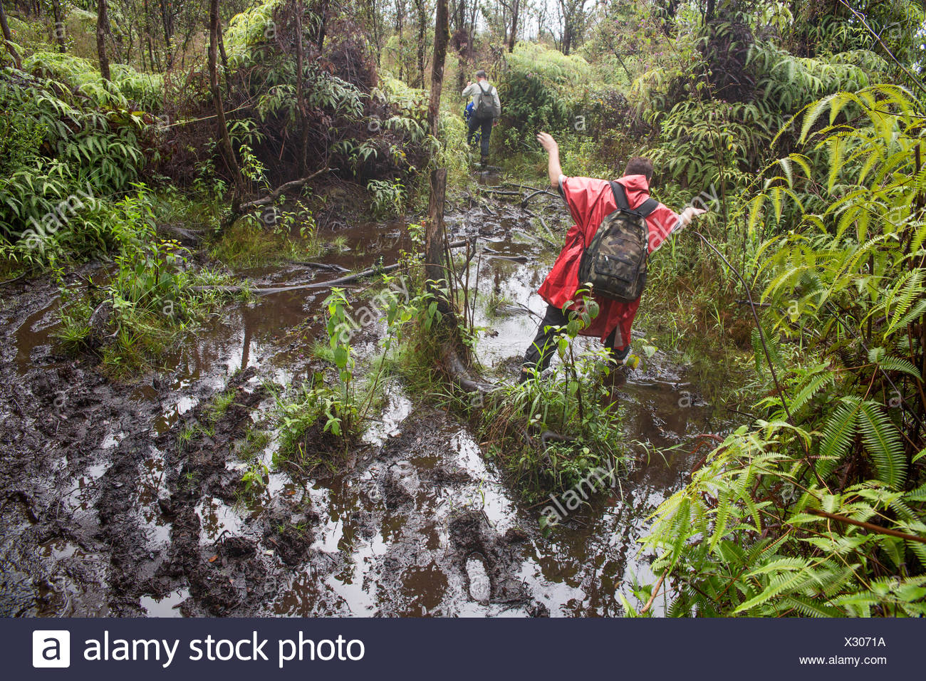 Big Island,hiking,rain forest,Kahaualea Natural aera reserve,reserve,Vulcanoes,National Park,Big Island,USA,Hawaii,Ame - Stock Image